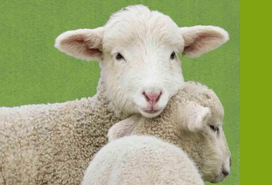 انعقاد قرارداد تلقیح مصنوعی گوسفند با مرکز اصلاح نژاد کرج