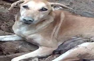 دلشوره یک سگ برای نجات تولههایش از زیر آوار + فیلم