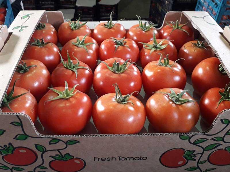 در جهت حمایت از کشاورزان صادرات گوجه فرنگی آزاد شد