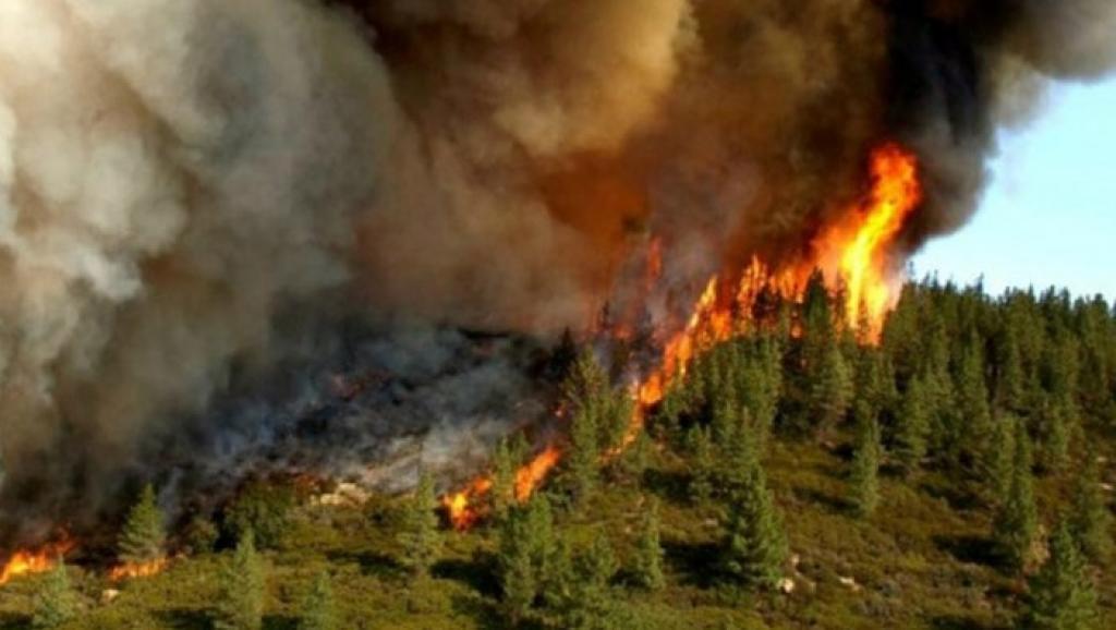 آتش سوزی جدیدی در جنگلهای ارسباران رخ نداده است
