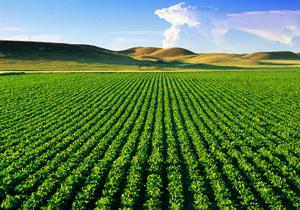 پنج هزار و ۴۰۰ میلیارد ریال اعتبار در بخش کشاورزی هزینه شد