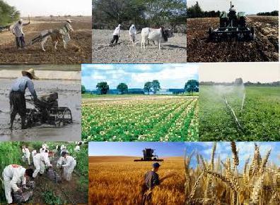 سرمایهگذاری ۲ هزار و ۱۵۰ میلیارد ریالی در بخش کشاورزی استان همدان