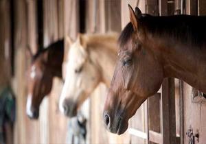 انعقاد تفاهم نامه صدوراسب به خارج کشور/ مدنظر قرار گرفتن پست قرنطینه اسب برای خراسان شمالی