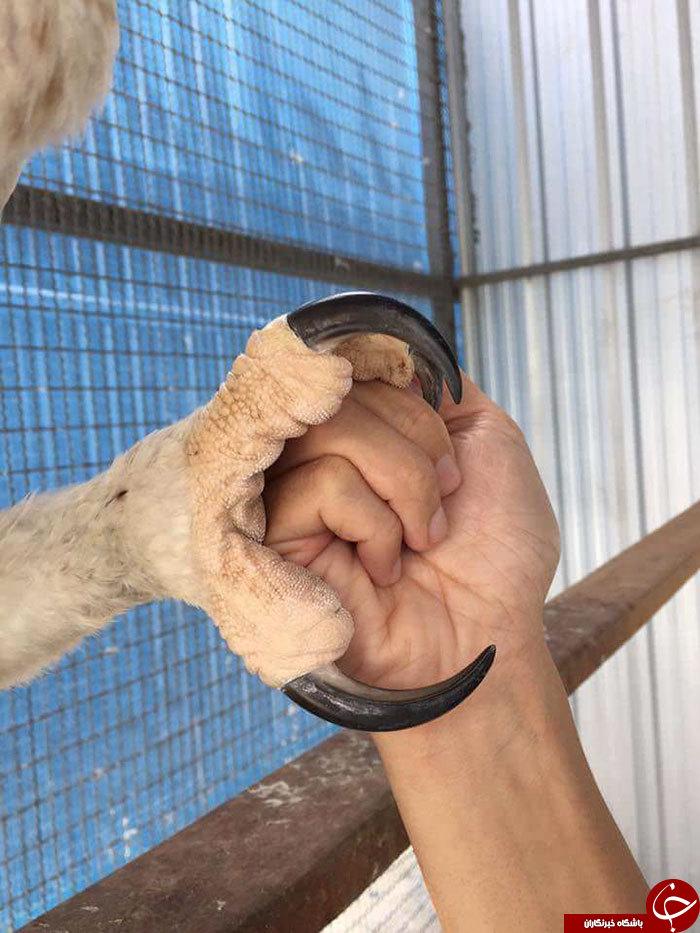 عقاب آدم نمایی که با انسان اشتباه گرفته می شود! + تصاویر///