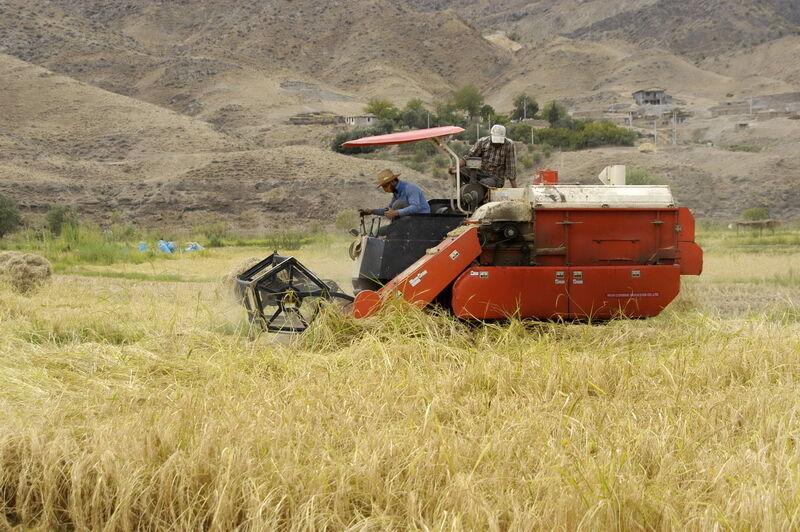 بیش از ۹۰ درصد تسهیلات بانک کشاورزی به بخش کشاورزی پرداخت شده است