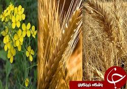 خرید بیش از ۹۰ هزار تن محصول کشاورزی در همدان
