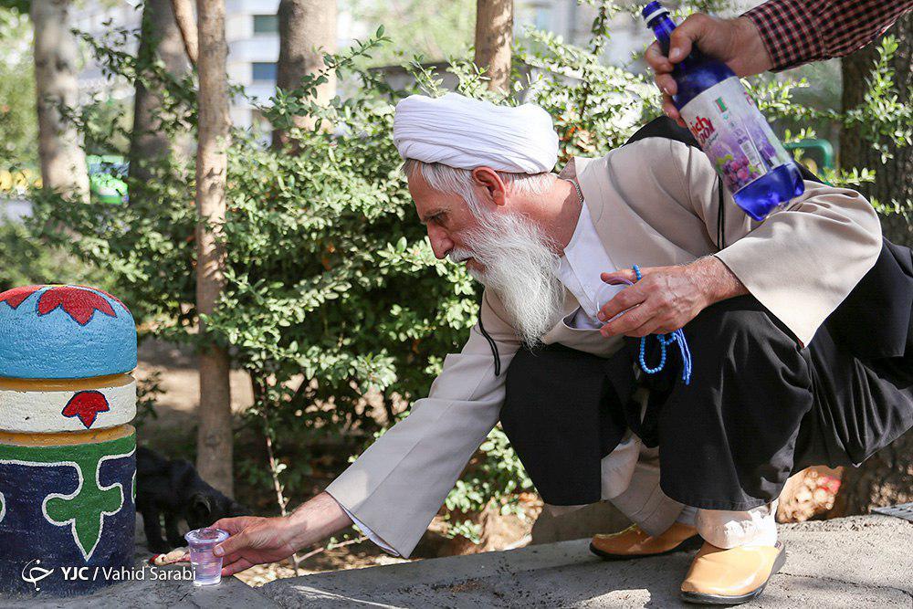 مهربانیهای کوچک/ اقدام پسندیده یک روحانی در برخورد با گربه گرسنه + تصویر