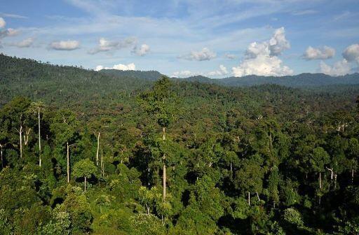 کشف آنتیبیوتیک جدید در جنگلهای گرمسیری/////گلی