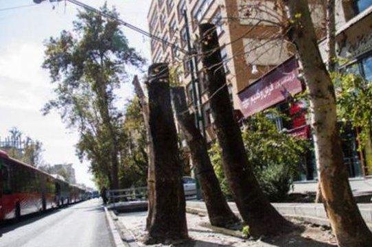 محیط زیست پیگیر خشکی درختان چنار خیابان ولیعصر است
