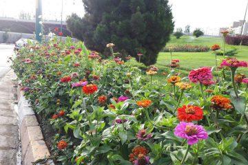 به روزآوری فضای سبز اطراف حرم مطهر با کاشت حدود ۲۰۰هزار بوته گل فصلی
