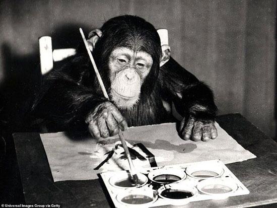 مزایده ۵۵ اثر نقاشی از یک شامپانزه + عکس
