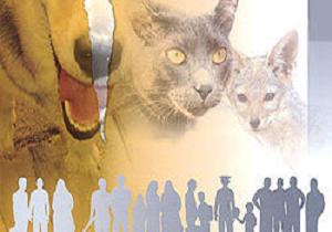 گزارش هزار و ۱۹۱ مورد حیوان گزیدگی در یزد