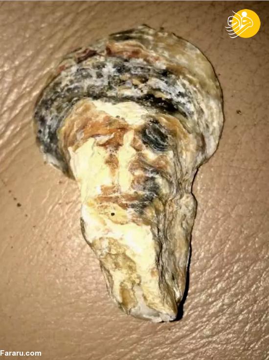 کشف صدف دریایی شبیه اسامه بن لادن! + عکس