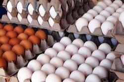 محبی/افزایش ۲۰۰ تومانی نرخ تخممرغ در بازار/ گزارشی از شیوع آنفولانزای حاد پرندگان نداشتیم