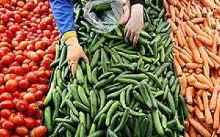 نیترات خیارهای بازار البرز بالاتر از حد مجاز/پوست خیار را نخورید///گلی