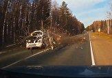 باشگاه خبرنگاران -فیلم لحظه وحشتناک سقوط درخت روی خودروی سواری