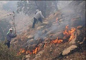 آتش از جنگلهای اندیکا دست کشید