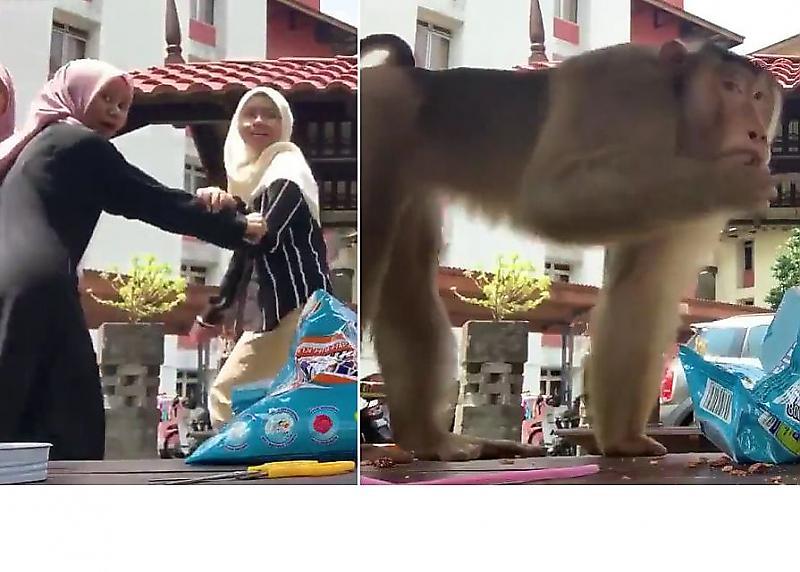 حمله وحشیانه میمون بازیگوش به سلفی دختران+فیلم