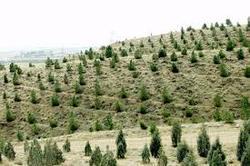 جنگل کاری ۲۰۰ هکتاری در ملایر