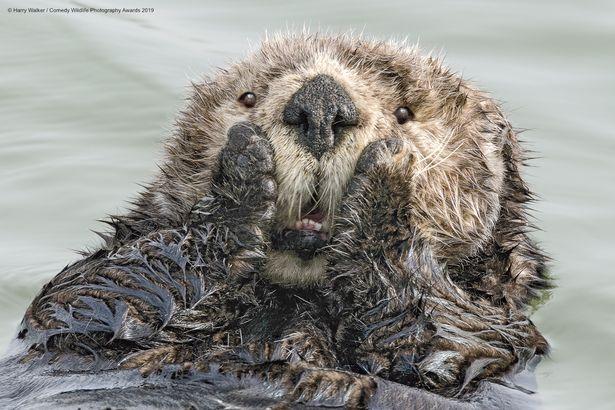 خنده دارترین واکنشهای حیوانات از لنز دوربین عکاسان+ تصاویر