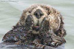 واکنش خندهدار و جالب حیوانات در قاب دوربین عکاسان + تصاویر