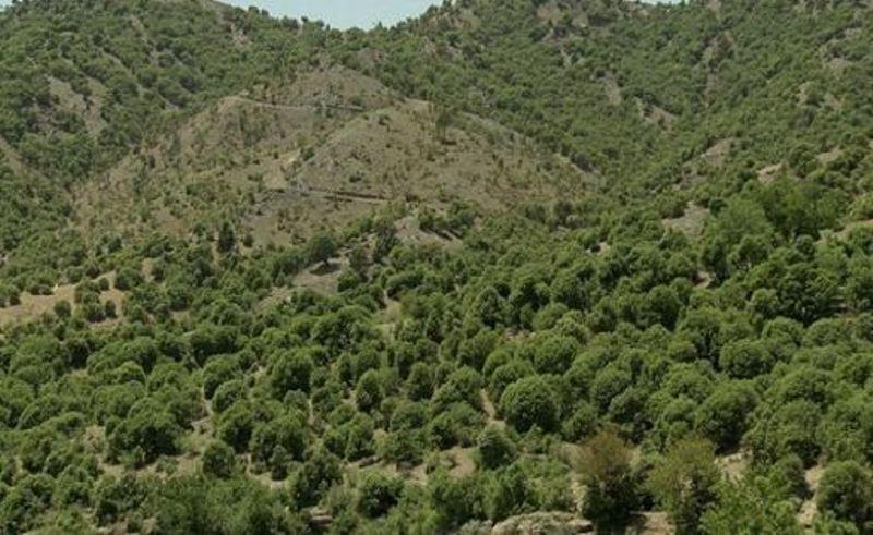 طرح حمایت از جنگلهای زاگرس اجرایی شد