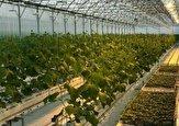 باشگاه خبرنگاران -احداث ۴۱ گلخانه جدید با هدف افزایش سطح زیر کشت محصولات کشاورزی