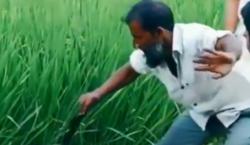 نمایش عجیب مرد روستایی در گرفتن مار شاه کبری + فیلم