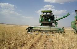 برداشت سالانه ۵۵ هزار تن محصول از اراضی شهرستان ایوان