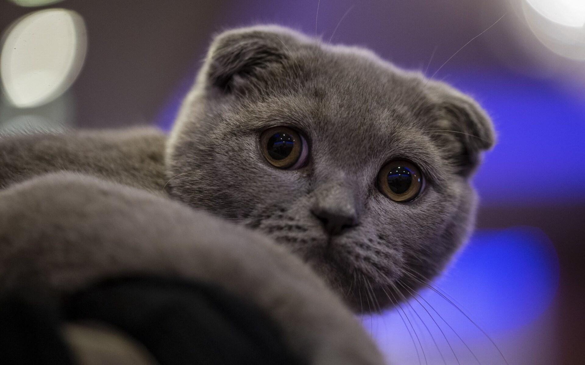 تصاویر روز: از تجمع قایقهای بادبانی در بندر تریسته ایتالیا گرفته تا فستیوال بینالمللی گربههای زیبا در آنکارای ترکیه