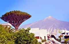 باشگاه خبرنگاران -زیباترین درختان جهان از دیدگاه زیستشناسان+ تصاویر