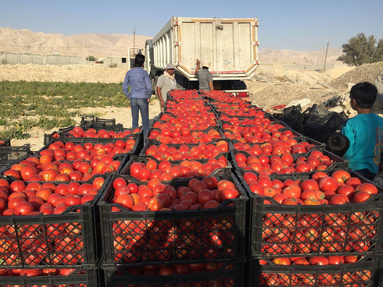داغی بازار شغل های فصلی در پاییز/ چاشنی های که به سفره ها رنگ و لعاب می دهند