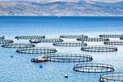 رونق پرورش ماهی در قفس در استان لرستان + فیلم