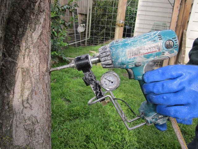 صرفهجویی ۹۰ درصدی آب با استفاده از آوندهای چوبی