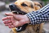 باشگاه خبرنگاران - گزارش ۲۲۰ مورد حیوان گزیدگی در بیجار