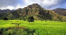 اجرای طرح مبارزه با آفت ارس واش در ۷۰۰ هکتار از اراضی ملی استان زنجان