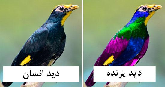 پرندهها دنیا را چگونه میبینند؟