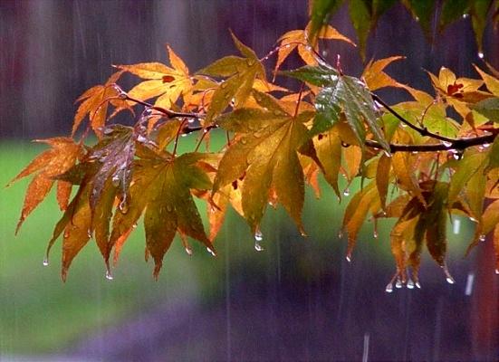 بارشهای پاییزه استان مرکزی بیشتر از حد معمول