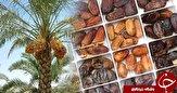 باشگاه خبرنگاران - استان بوشهر توان برگزاری میز صادرات خرما را دارد