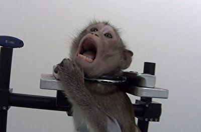 فیلمی دلخراش از زجرکش کردن حیوانات برای آزمایش محصولات دارویی