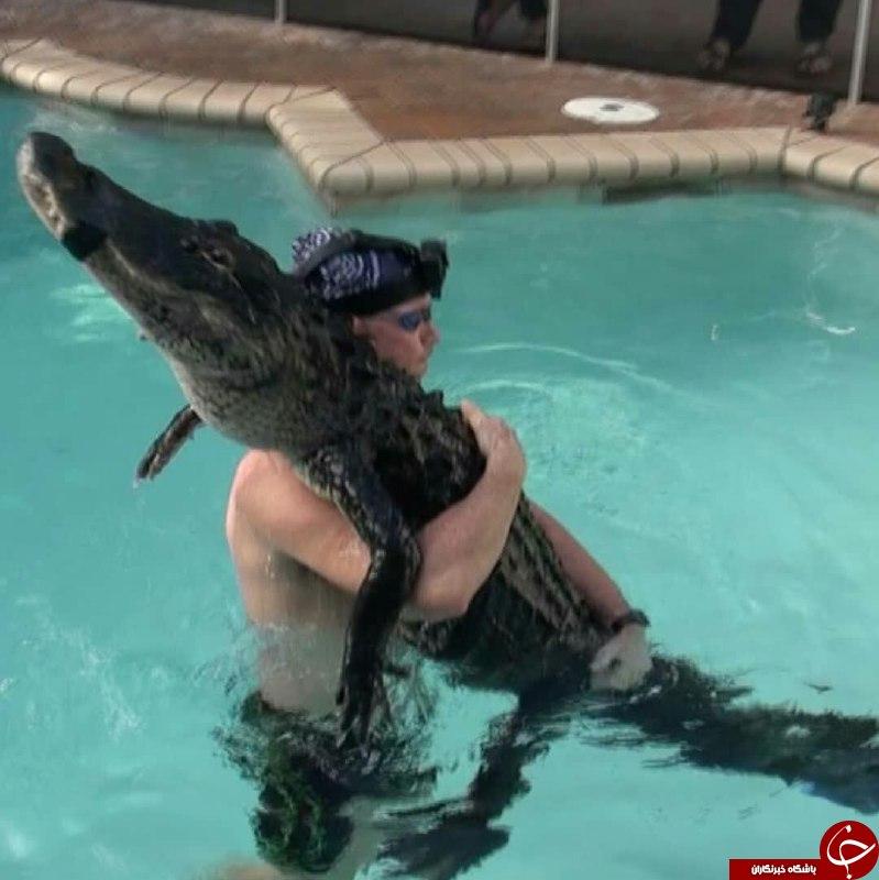 نمایش عجیب مرد بی باک با کروکودیل غول پیکر در استخر! +تصاویر