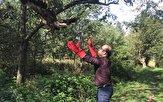 باشگاه خبرنگاران -بازگشت یک عقاب به طبیعت صومعه سرا