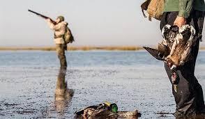 آغاز صدور مجوز شکار پرندگان به صورت محدود در گیلان