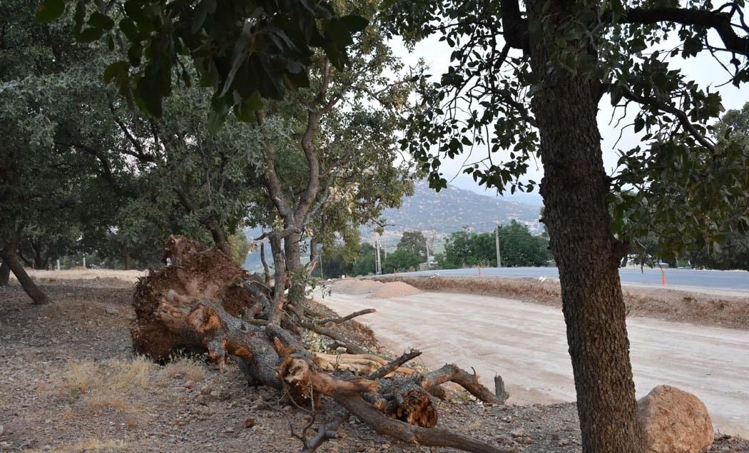 باشگاه خبرنگاران -بازنگری در پروژه یاسوج ـ سیسخت / قطع درختان ۵۰۰ ساله ادامه دارد +تصاویر