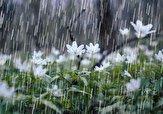 باشگاه خبرنگاران -بارش باران هماکنون در صومعهسرا گیلان + فیلم