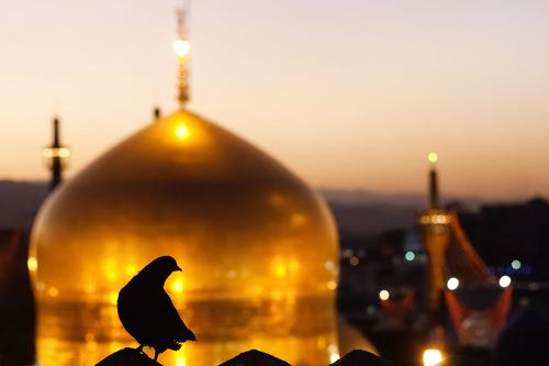 «کبوترانه» ویژه برنامه شبکه سه به مناسبت شهادت امام رضا(ع)