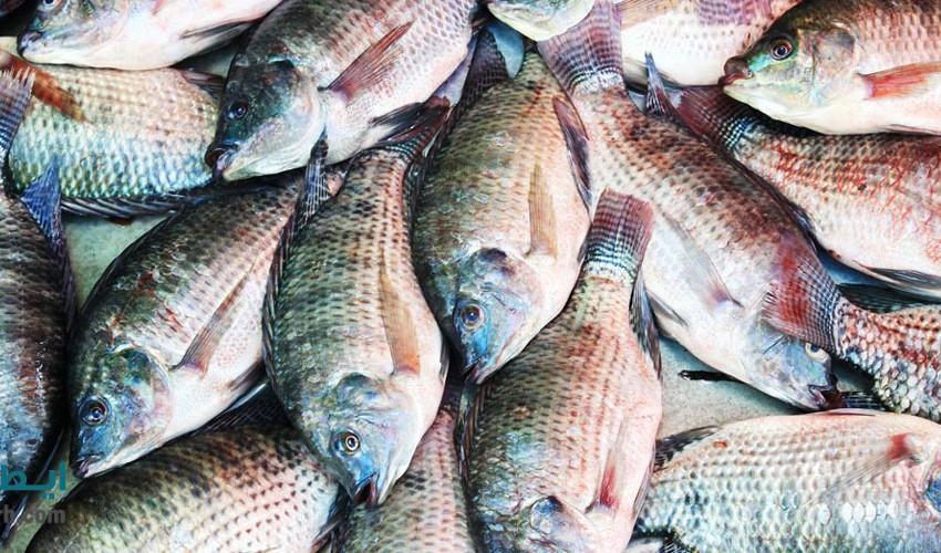 تولید محصولات شیلاتی به یک میلیون و ۲۶۲ هزار تن میرسد/ کمبود تسهیلات در خصوص پرورش ماهی در قفس