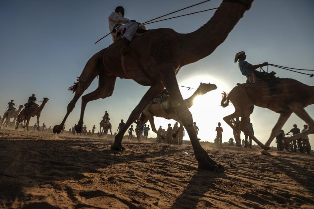 تصاویر روز: از رقابتهای شترسواری در غزه تا تبحر مرد ۷۲ ساله در بالارفتن از درخت