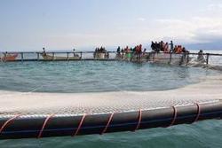 ۱۲ پهنه آبی برای پرورش ماهی در قفس شناسایی شد