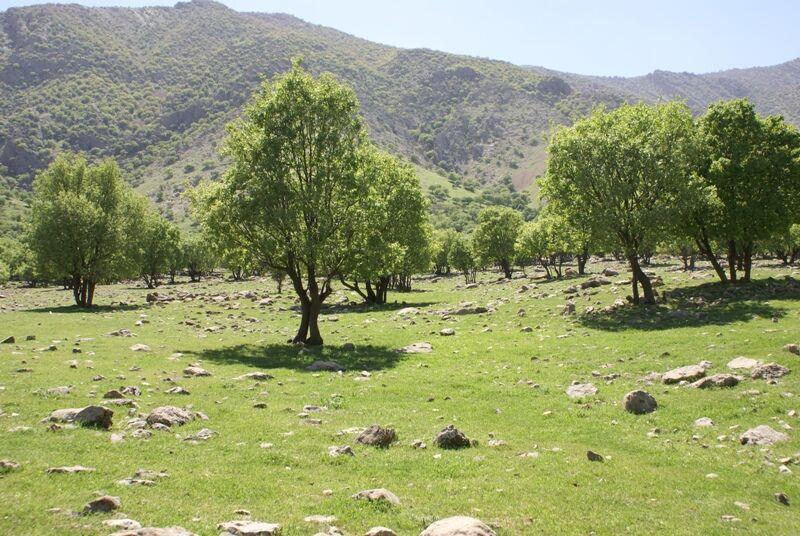 ایجاد ۲ میلیون هکتار جنگل دست کاشت در کشور